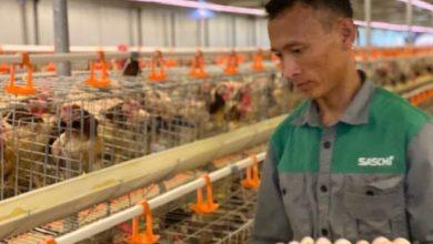 .: VGP News :. | Cần có vùng nguyên liệu để sản xuất thức ăn chăn nuôi