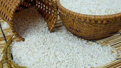 Giá lúa gạo hôm nay 26/10: Xu hướng đi ngang, khó bật tăng
